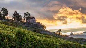 Lavaux, Zwitserland - Terrassen III van de Wijngaard Stock Afbeelding