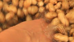 Lave el cacahuete debajo del golpecito almacen de metraje de vídeo