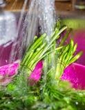 Lave el perejil, ducha del eneldo, cocina, platos, lave los verdes Fotos de archivo libres de regalías