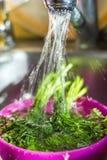 Lave el perejil, ducha del eneldo, cocina, platos, lave los verdes Foto de archivo