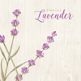 Laveder over wooden panels. Aromatic laveder over gray wooden panels. Vector illustration Stock Photo