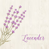 Laveder over wooden panels. Aromatic laveder over gray wooden panels. Vector illustration Stock Photography