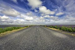 Lavenda flowers by empty asphalt road in Iceland Stock Photos