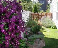 Lavendar και κήπος clematis Στοκ φωτογραφίες με δικαίωμα ελεύθερης χρήσης