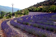 lavendar royaltyfri bild
