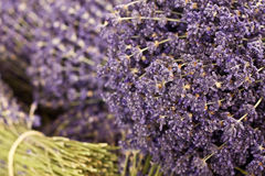 Lavendar Stock Photos