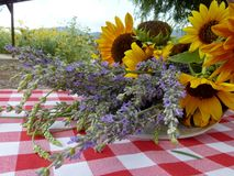 Lavendar and Sunflowers. Lavender and sunflowers n a country setting with a red checkered tablecloth. This picture was taken in Ojai, California on a lavender stock image