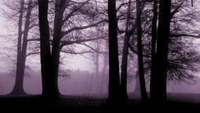 Lavendar trees. Sillouetted trees at dawn with lavender light Stock Photo