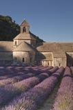 Lavende de la abadía Fotos de archivo libres de regalías