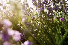 Lavendelätherisches öl auf dem Gebiet Lizenzfreie Stockbilder