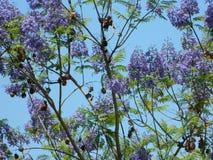 Lavendel 2 Arkivfoto