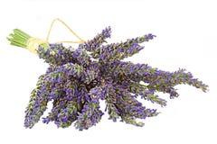 Lavendel Lizenzfreie Stockfotografie