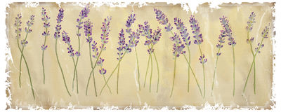 Lavendel stock illustrationer