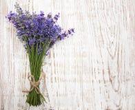 Lavendel Stock Fotografie