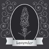 Lavendel-06 Royalty-vrije Stock Fotografie