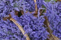 Lavendel Royalty-vrije Stock Foto's
