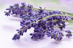 Lavendel 库存图片