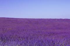 Lavendel archiviert stockbild