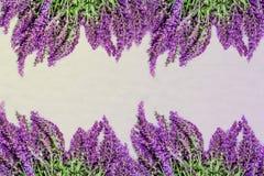 Lavendel auf weißem Hintergrund Stockbild