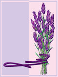 Lavendel-Bündel vektor abbildung