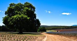 Lavendel-Bauernhof Lizenzfreie Stockbilder