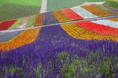 Lavendel-Bauernhof in Hokkaido, Japan Stockfotos