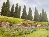 Lavendel bij de voet van cipresheuvel Stock Foto's