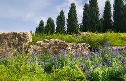 Lavendel bij de voet van heuvel Stock Foto's