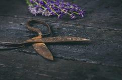 Lavendel blüht, Rosmarin, Minze, Thymian, Melisse mit alten Scheren auf einem schwarzen Holztisch Gebranntes Holz Badekurort und  Stockfotografie