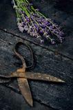 Lavendel blüht, Rosmarin, Minze, Thymian, Melisse mit alten Scheren auf einem schwarzen Holztisch Gebranntes Holz Badekurort und  Stockfotos
