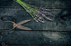 Lavendel blüht, Rosmarin, Minze, Thymian, Melisse mit alten Scheren auf einem schwarzen Holztisch Gebranntes Holz Badekurort und  Lizenzfreies Stockbild