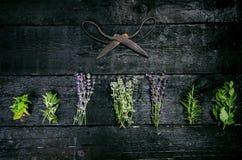 Lavendel blüht, Rosmarin, Minze, Thymian, Melisse mit alten Scheren auf einem schwarzen Holztisch Gebranntes Holz Badekurort und  Lizenzfreies Stockfoto