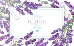 Lavendel blommar banret Royaltyfria Foton