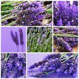 Lavendel blommar collage Arkivbild