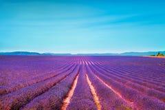 Lavendel blommar det blommande fältet och klar himmel Valensole som bevisas royaltyfri foto