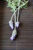 Lavendel-Blumen Stockfoto