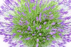 Lavendel Buch stockfotografie