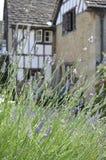 Lavendel Bush vor historischem Lacock-Haus lizenzfreies stockbild