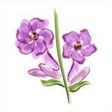 Lavendel closeupfärger blommar röd yellow royaltyfri illustrationer