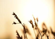 Lavendel in der Sonne Stockbilder