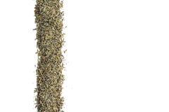 Lavendel in der vertikalen Reihe auf lokalisiertem Weiß Stockfoto