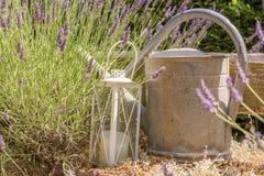 Lavendel die met lantaarn en een oude gieter wordt verfraaid stock foto's