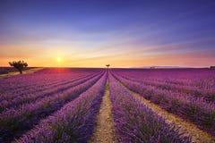 Lavendel en eenzame bomen bergopwaarts op zonsondergang De Provence, Frankrijk stock afbeelding