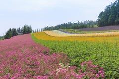 Lavendel en kleurrijke bloemgebieden in Furano, Hokkaido Stock Foto's