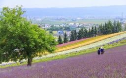 Lavendel en kleurrijke bloemgebieden in Furano, Hokkaido Royalty-vrije Stock Afbeeldingen