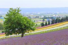 Lavendel en kleurrijke bloemgebieden in Furano, Hokkaido Royalty-vrije Stock Foto