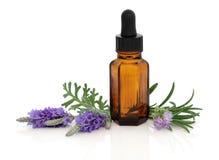 Lavendel en Rosemary Essence stock afbeeldingen