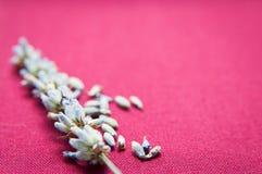 Lavendel en zaden Stock Afbeelding