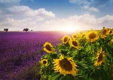 Lavendel en zonnebloemengebieden stock foto