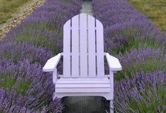Lavendel farbiger Adirondack-Stuhl zentrierte in den Lavendelreihen Lizenzfreie Stockbilder